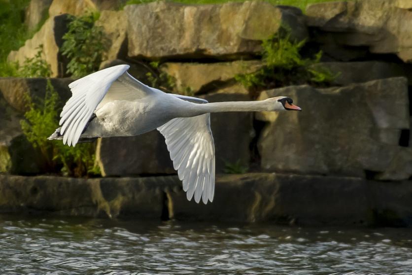Swan On Radar