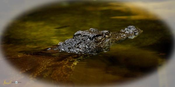 Crocodiles of the World by jb_127