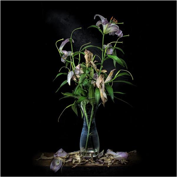 Lilies by StickyW