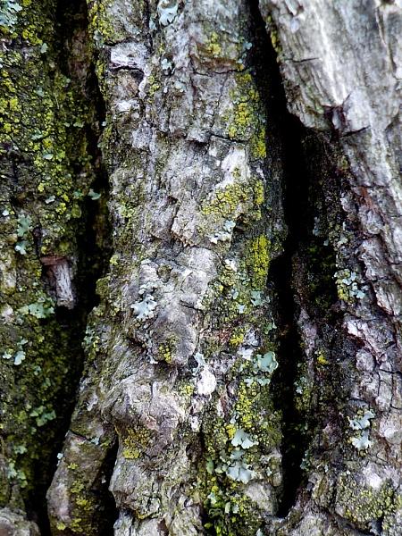 PARK of a TREE by TimothyDMorton
