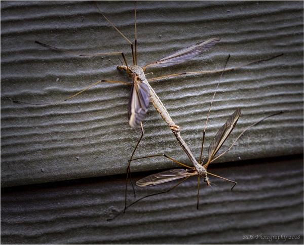 Annoying Bugs by Daisymaye