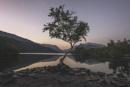 The Tree, Llyn Padarn by pink
