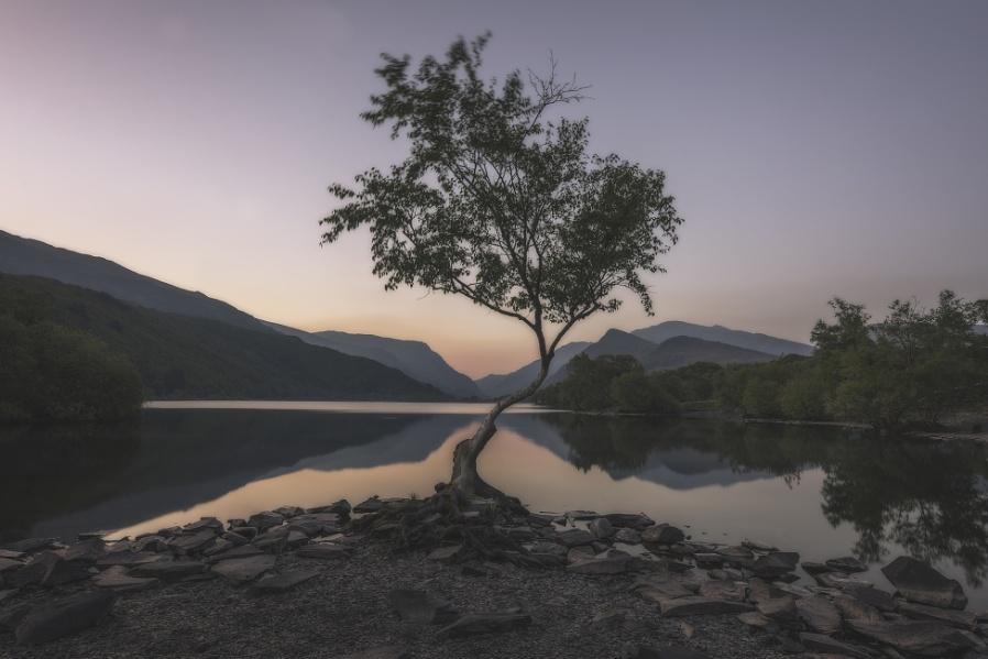 The Tree, Llyn Padarn