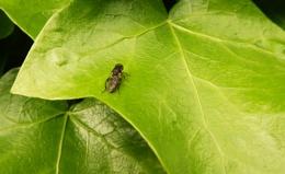 Bugs & Green...
