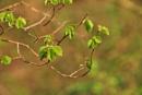 Green Power... by Chinga