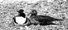 Photo : Love birds