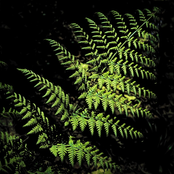 Frond by RadarUK