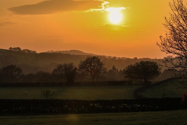 The Lone Ewe by Fefe