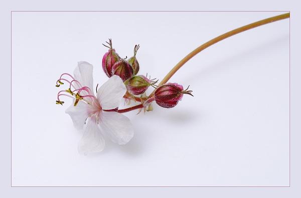 Natures Elegance by deavilin