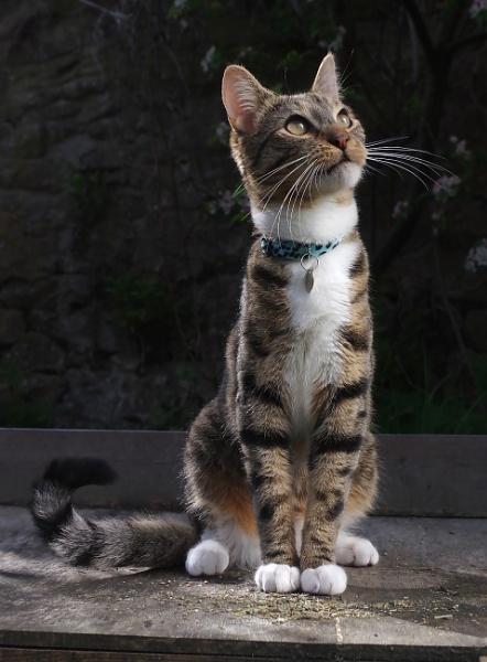 Posing cat by turniptowers