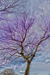 Purple tinge