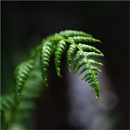 Fern :  A by taggart