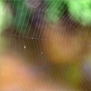 A Spider Web by taggart