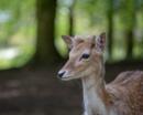 Oh deer by annaliese