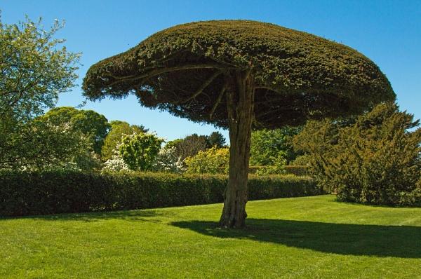 The tree by Janetdinah