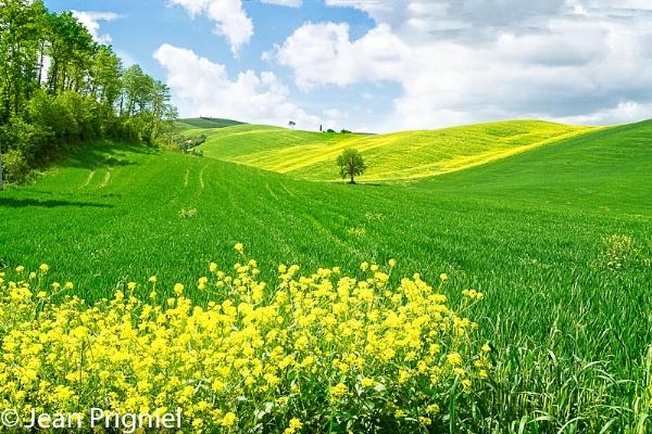Spring at Toscane by Jprigniel