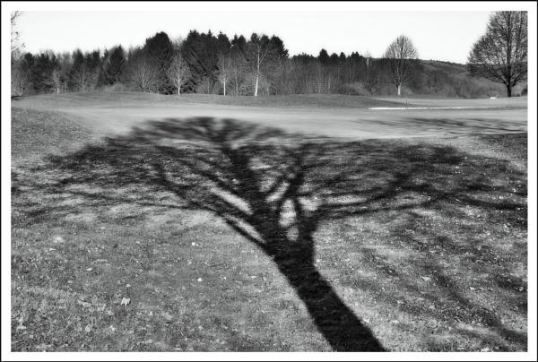 Fallen Tree by kw