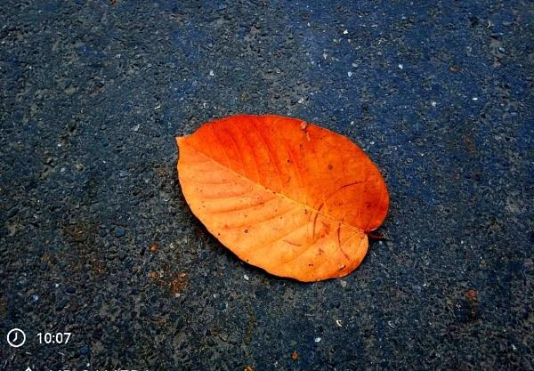 #Leaf by FotograferAjAy