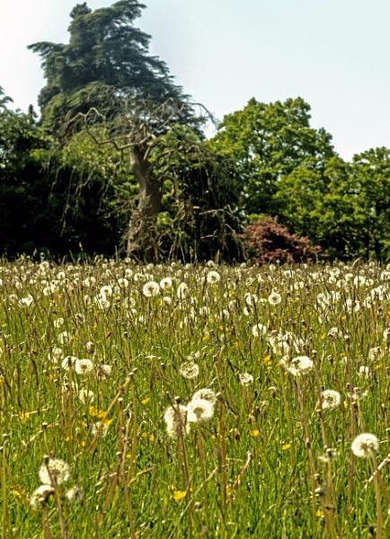 Calke Abbey  Gardens by mmart