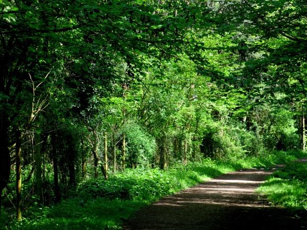 Woodland Walk by SUE118
