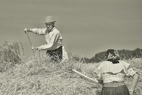 Memories of Harvest by Klacansky
