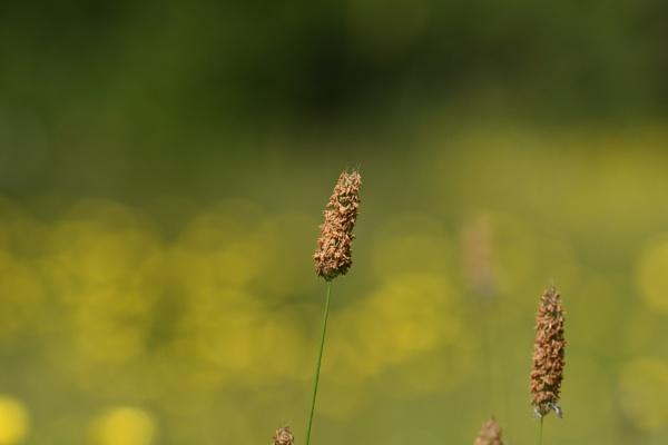 Wild Grass by ShaunsPics