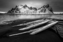 Petrified Trees Iceland by Tonyd3