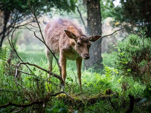 Deer shaker by Stevetheroofer
