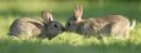 Bunnies by AlexAppleby