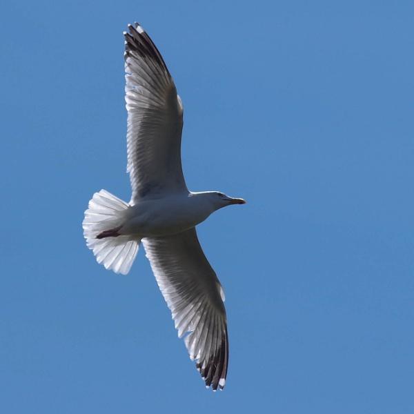 Bird by Charliemc55
