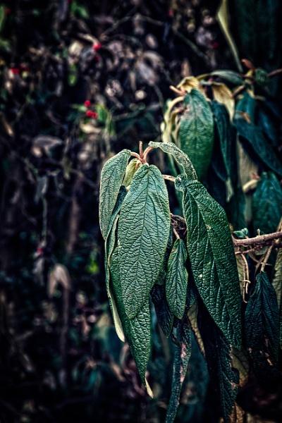 Winter leaves by rninov