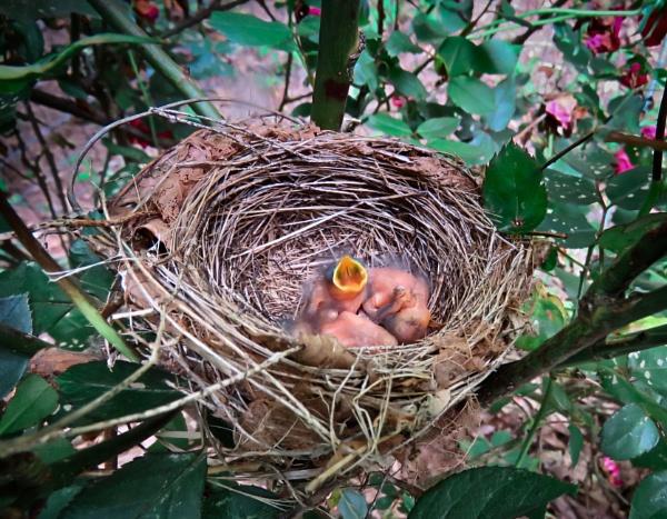 We have babies! by sheilajean48
