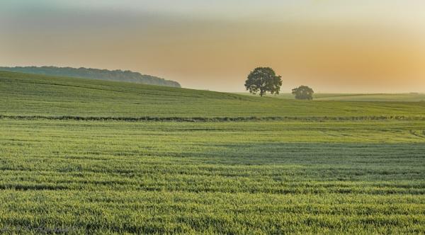 A hazy morning in Cambridgeshire by AnnHarrisskitt