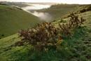 retreating mist by alfpics