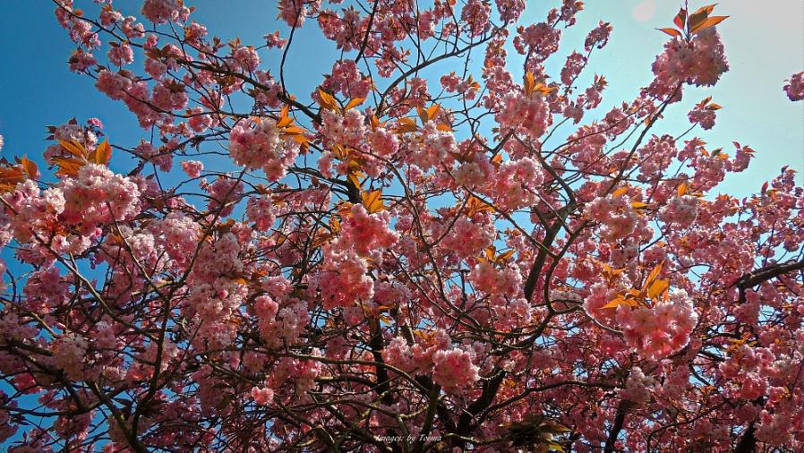 Hello Blossom!