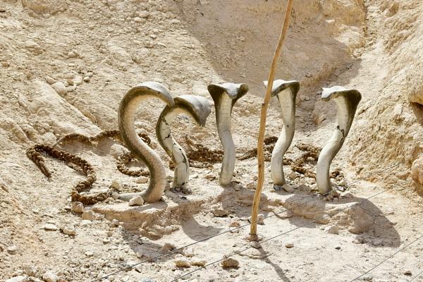 Ancient Serpents by Savvas511
