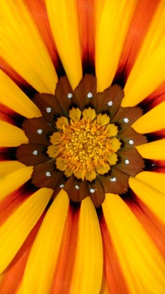 Flower by litesport