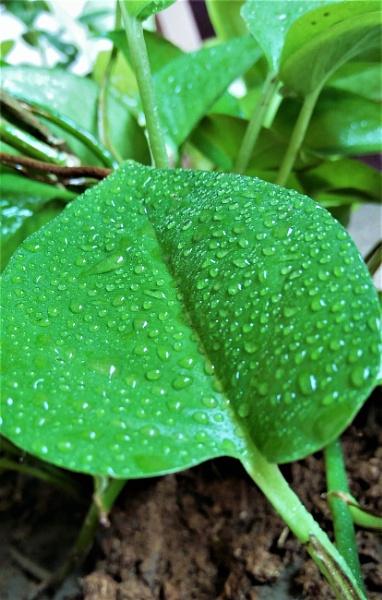 beautiful green leafs by mohammadahmedcr7
