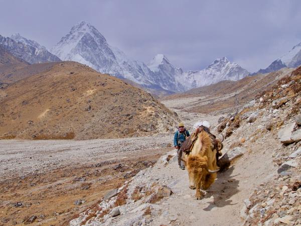 Yak Herder by johnhiggins