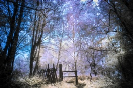 In the Woods.IR,