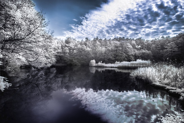 Swanick.3. infrared by frenchie44