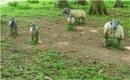 Looking sheepish! by franken