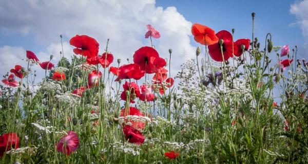 wild flowers by jimlad