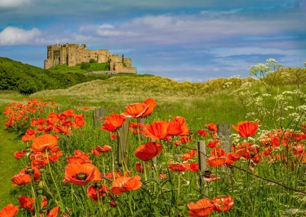 poppy northumbria by jimlad
