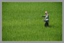 The Same Field by prabhusinha