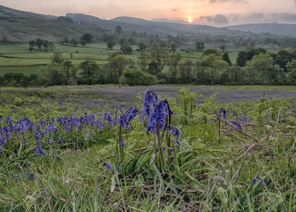 Bluebell Dawn by Gavin_Duxbury