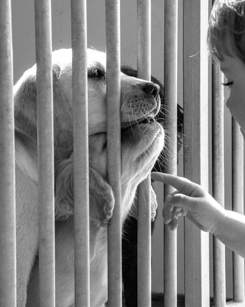 Puppy Love by stu7131