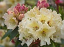 Bouquet by CaroleS