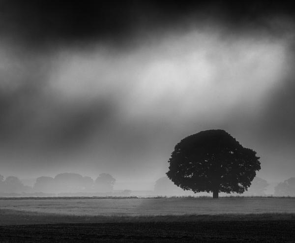 Oak Tree by Stumars