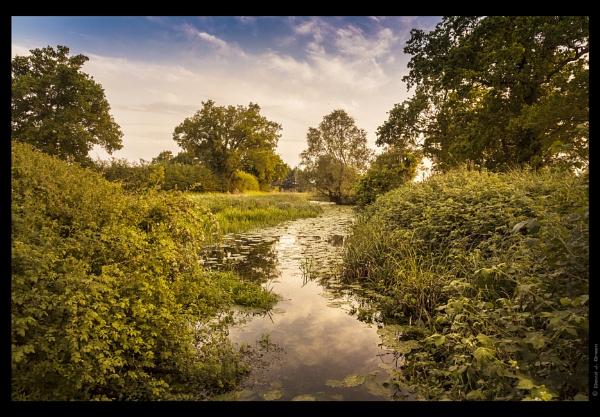 Summer Evening by david j. green